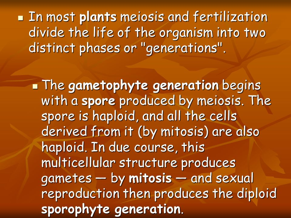 In most plants meiosis and fertilization divide the life of the organism into two distinct phases or generations .