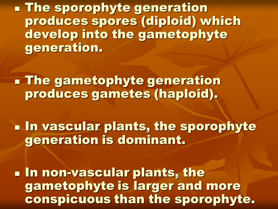 The sporophyte generation produces spores (diploid) which develop into the gametophyte generation.