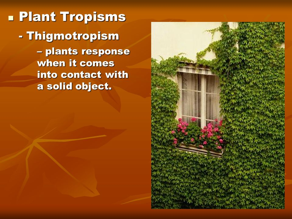 Plant Tropisms - Thigmotropism