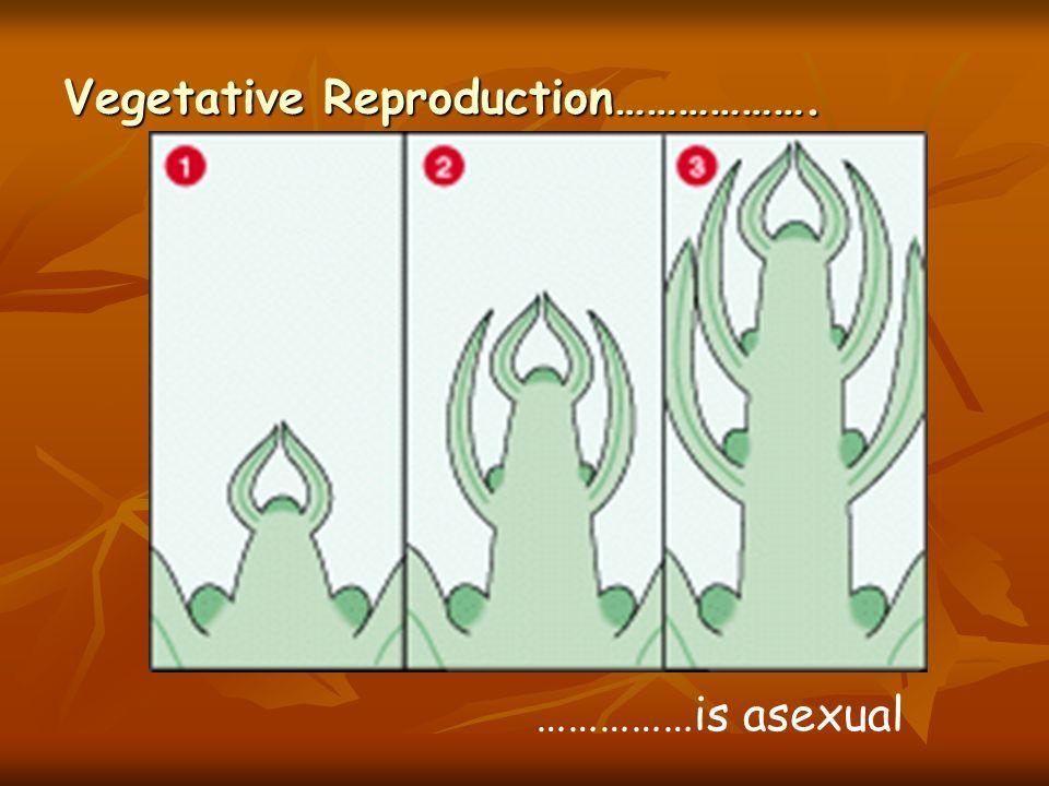 Vegetative Reproduction……………….