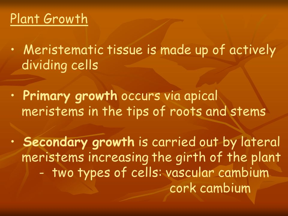 Plant GrowthMeristematic tissue is made up of actively. dividing cells. Primary growth occurs via apical.