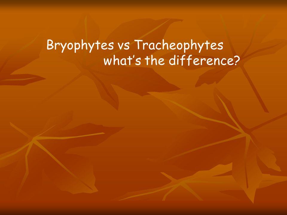 Bryophytes vs Tracheophytes