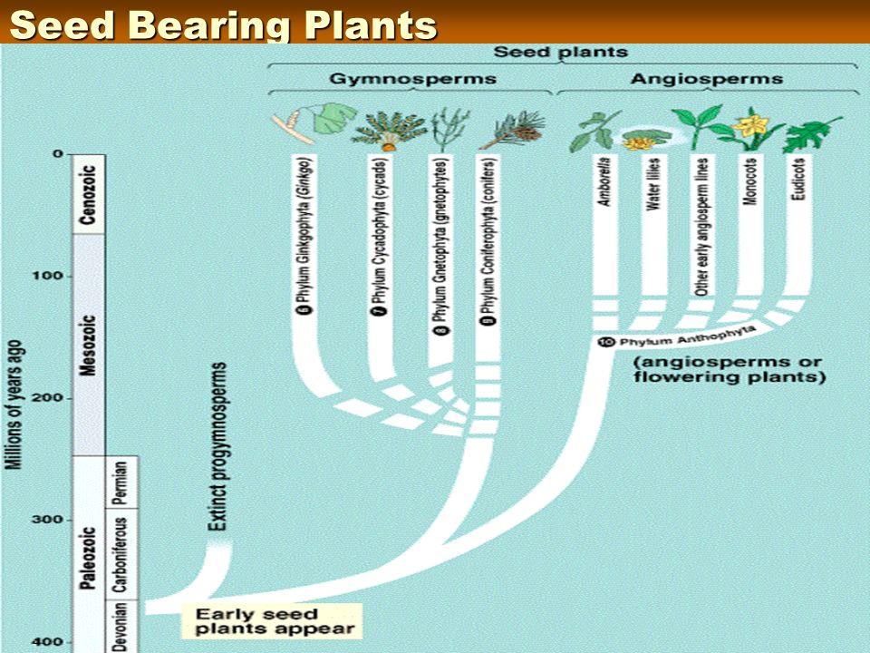 Seed Bearing Plants