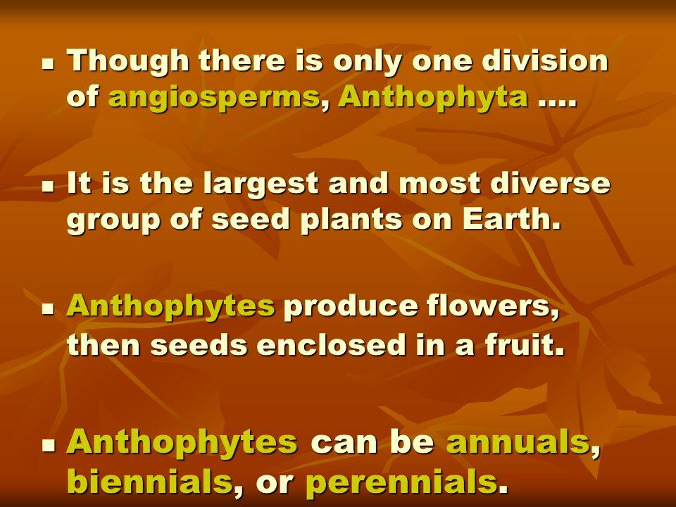 Anthophytes can be annuals, biennials, or perennials.