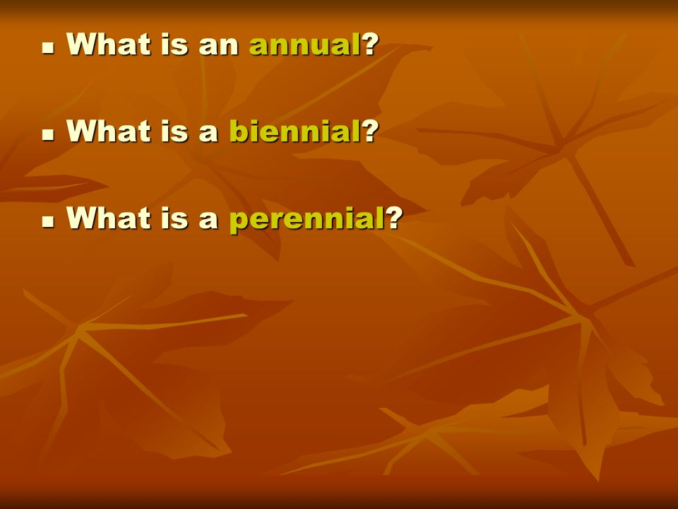 What is an annual What is a biennial What is a perennial