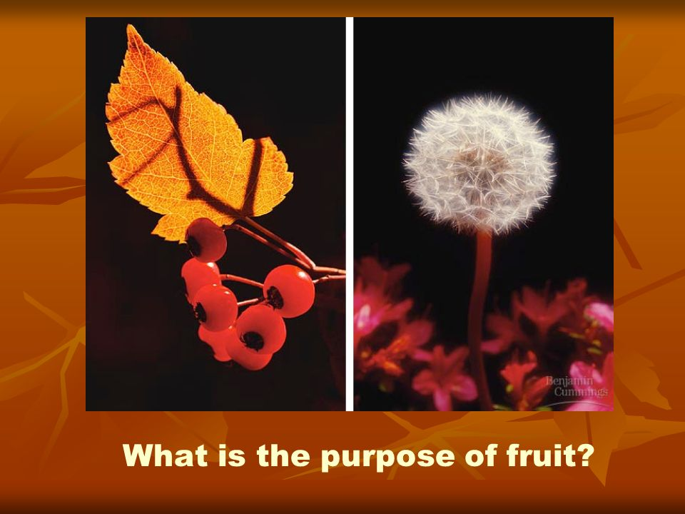 What is the purpose of fruit