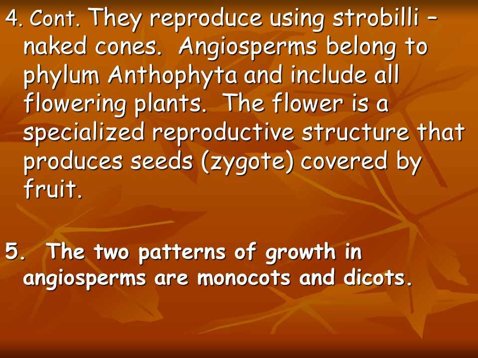4. Cont. They reproduce using strobilli – naked cones
