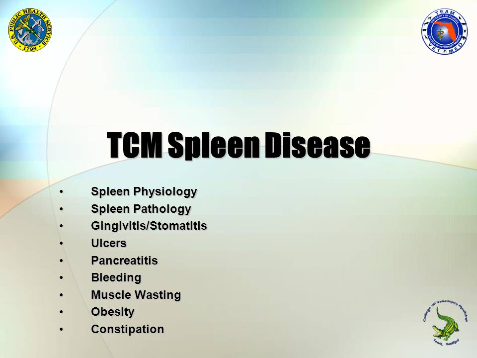 TCM Spleen Disease Spleen Physiology Spleen Pathology