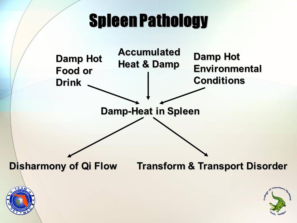 Spleen Pathology Accumulated Heat & Damp