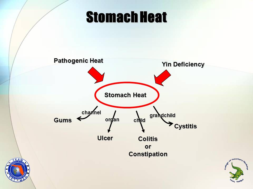 Stomach Heat Pathogenic Heat Yin Deficiency Stomach Heat Gums Cystitis