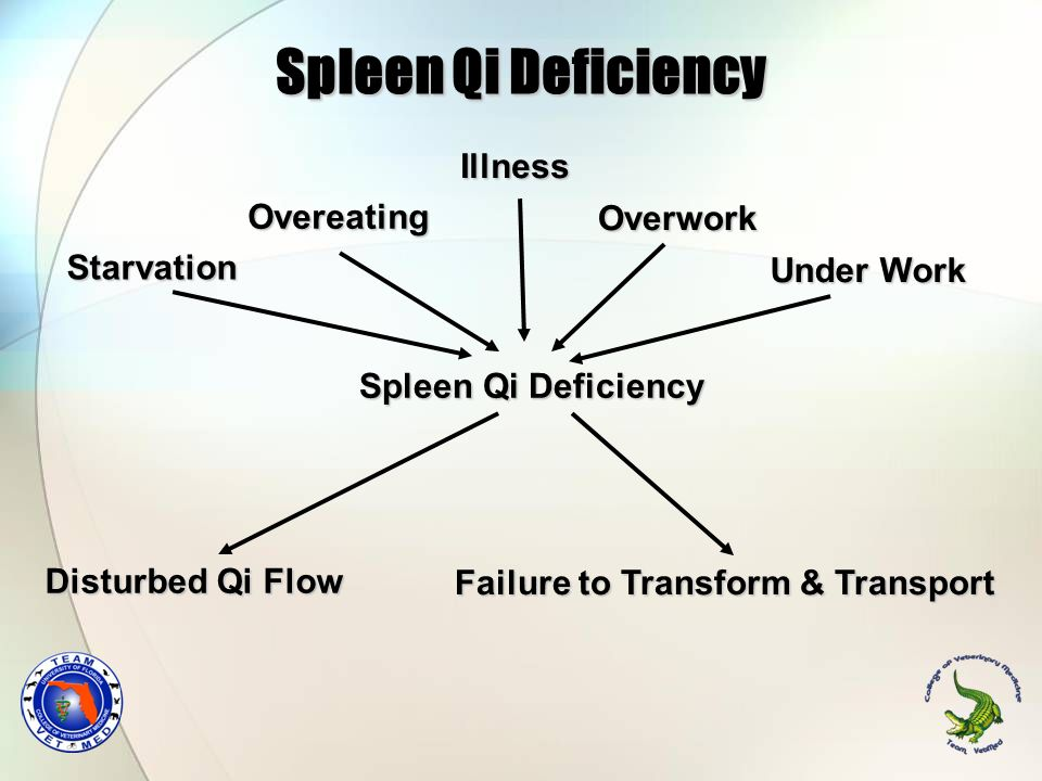 Spleen Qi Deficiency Illness Overeating Overwork Starvation Under Work