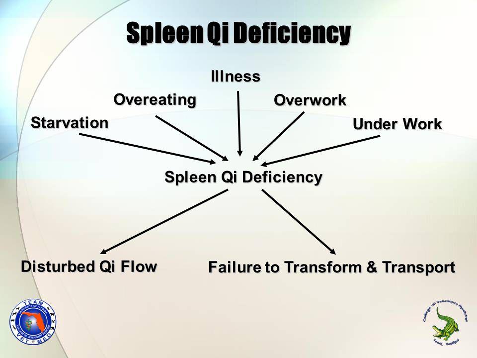 Spleen Qi Deficiency Illness Overeating Overwork Starvation Under Work