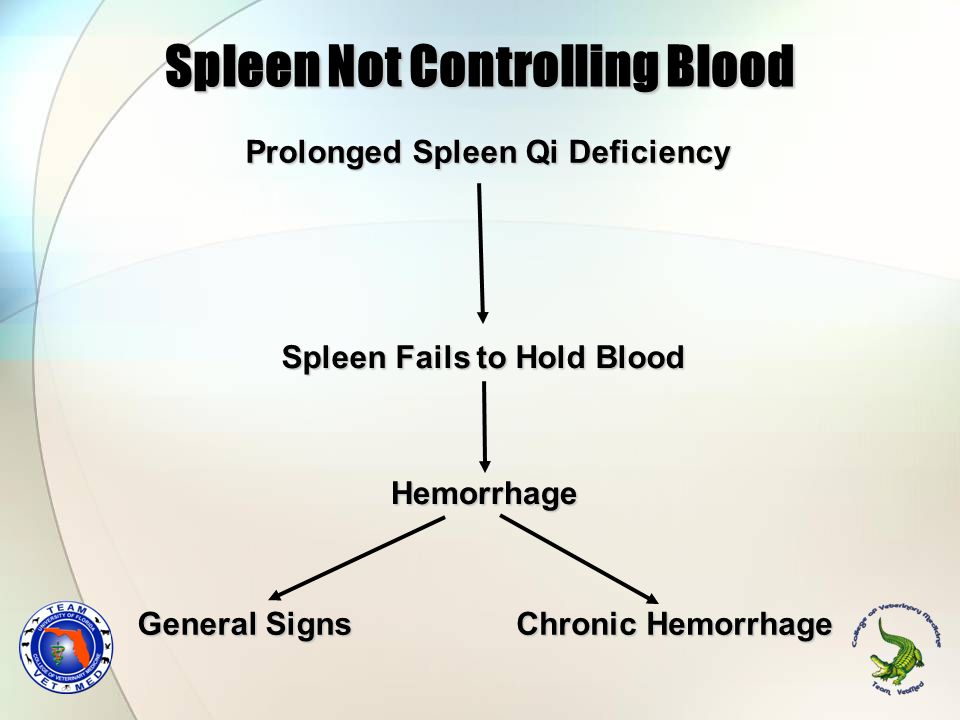Spleen Not Controlling Blood