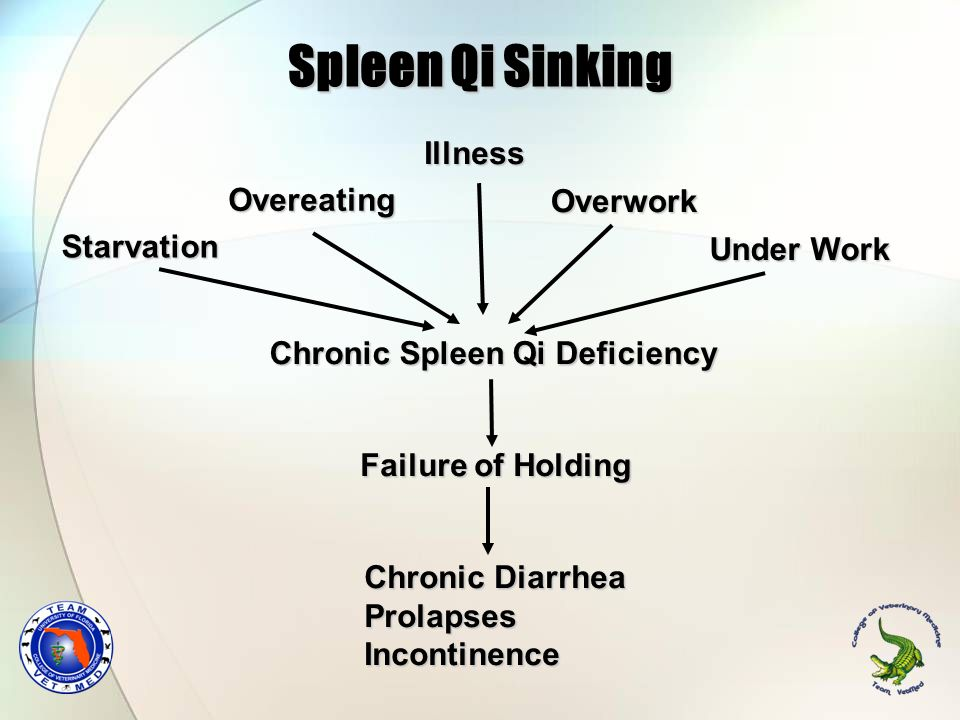 Spleen Qi Sinking Illness Overeating Overwork Starvation Under Work