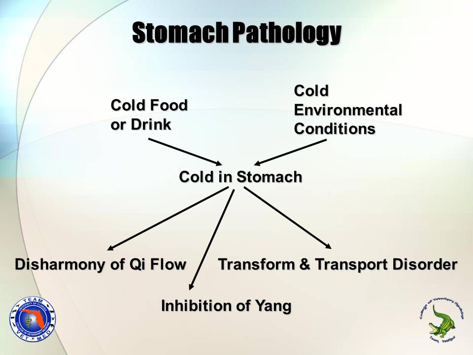 Stomach Pathology Cold Environmental Conditions Cold Food or Drink