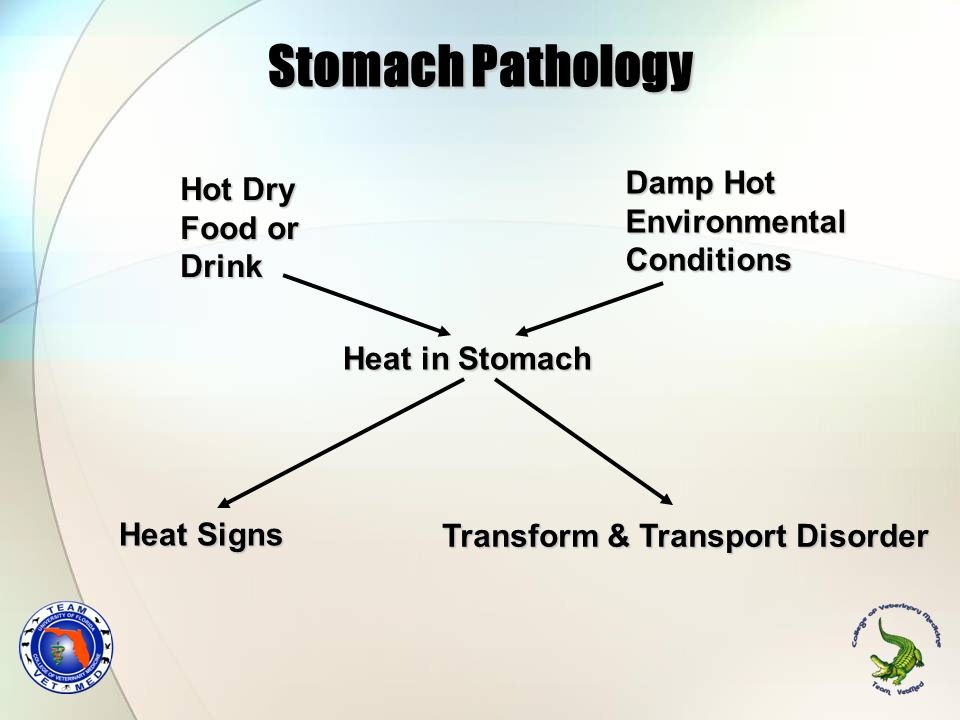 Stomach Pathology Damp Hot Environmental Conditions