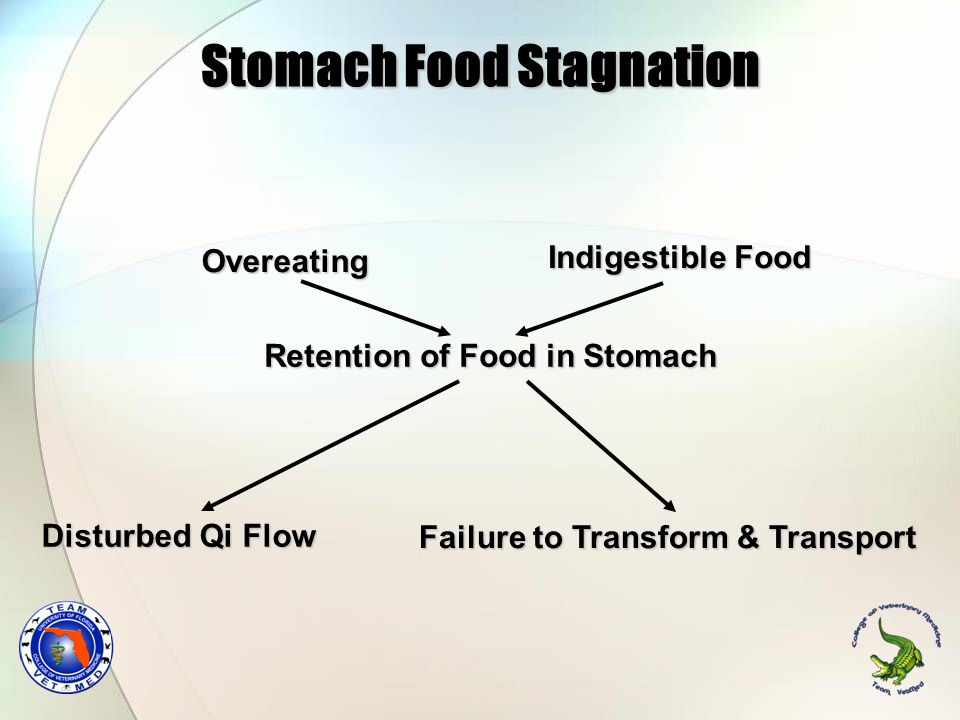 Stomach Food Stagnation