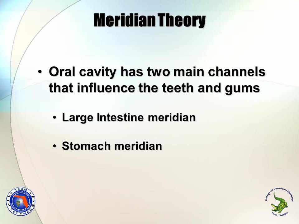 Meridian Theory Oral cavity has two main channels that influence the teeth and gums. Large Intestine meridian.