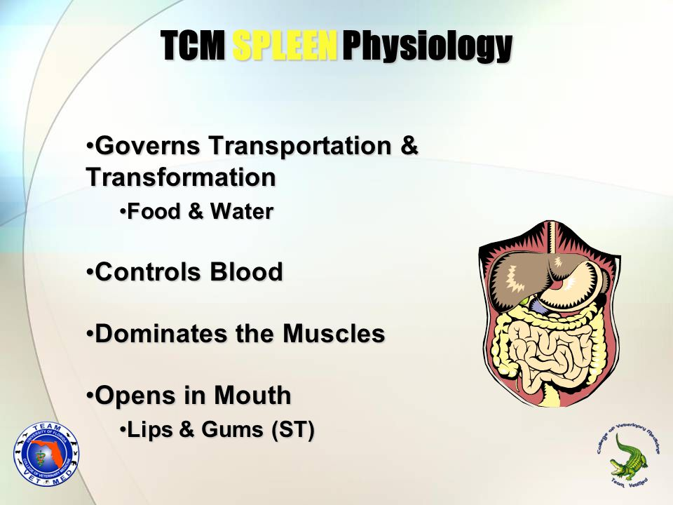 TCM SPLEEN Physiology Governs Transportation & Transformation