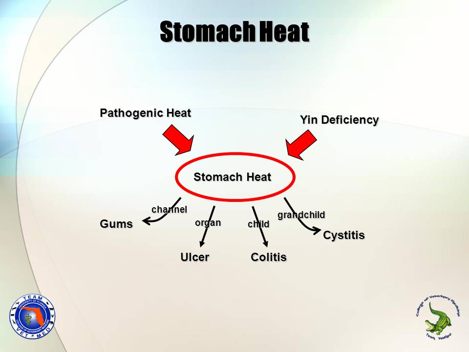 Stomach Heat Stomach Heat Pathogenic Heat Yin Deficiency Gums Ulcer