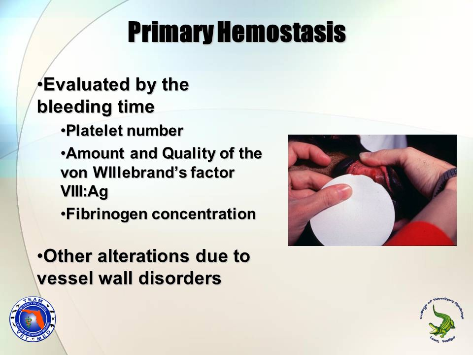 Primary Hemostasis Evaluated by the bleeding time
