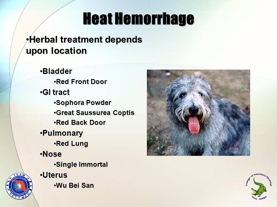 Heat Hemorrhage Herbal treatment depends upon location Bladder