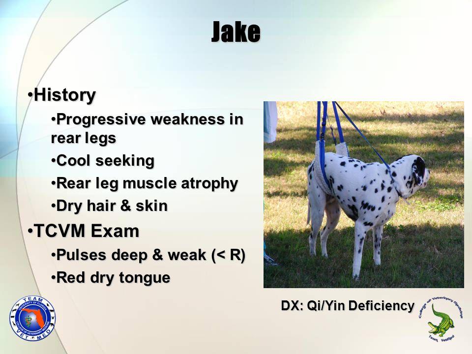 Jake History TCVM Exam Progressive weakness in rear legs Cool seeking