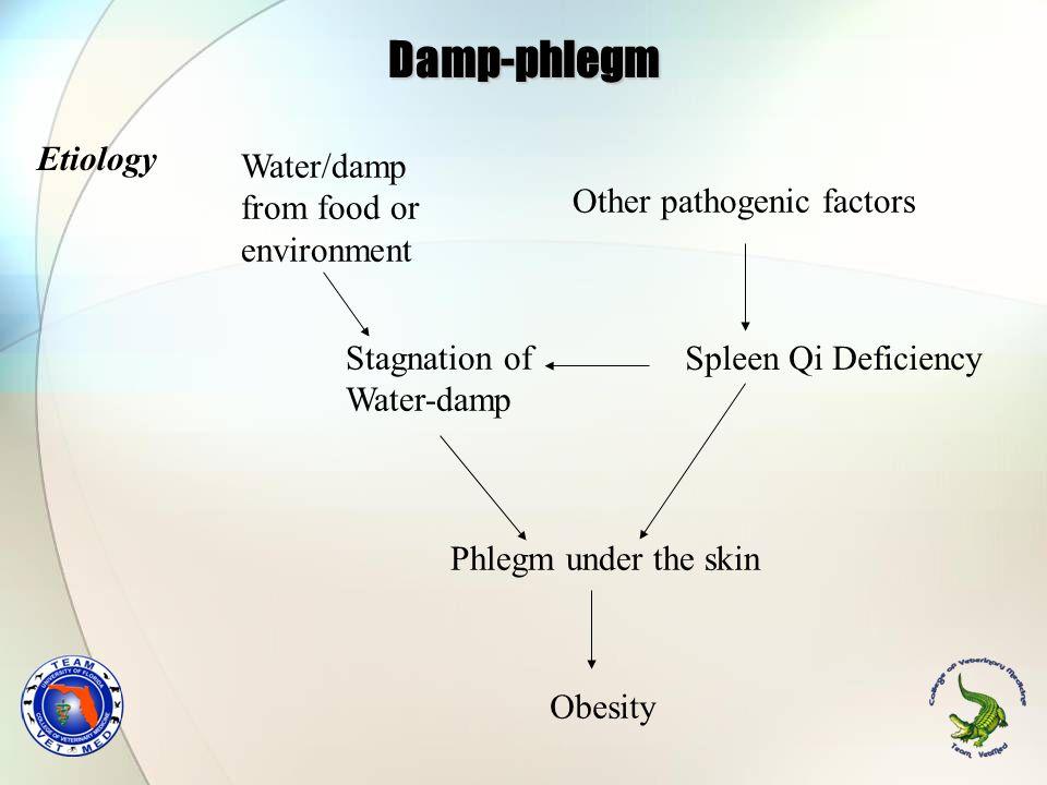 Damp-phlegm Etiology Spleen Qi Deficiency Water/damp from food or