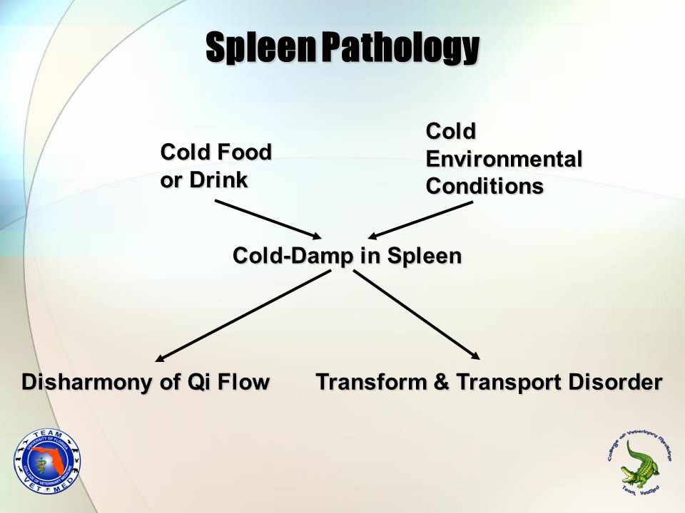 Spleen Pathology Cold Environmental Conditions Cold Food or Drink