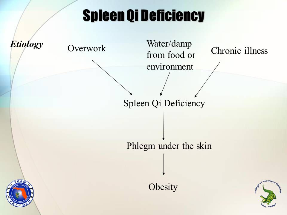 Spleen Qi Deficiency Etiology Water/damp Overwork from food or