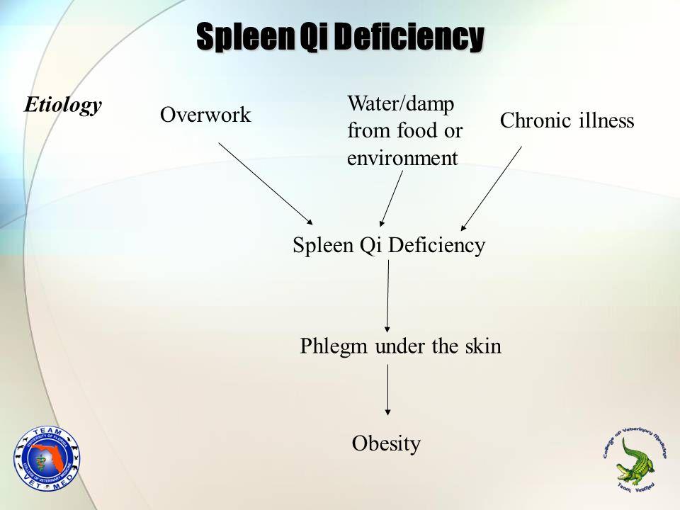 Spleen Qi Deficiency Etiology Water/damp Overwork from food or