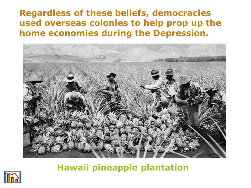 Hawaii pineapple plantation