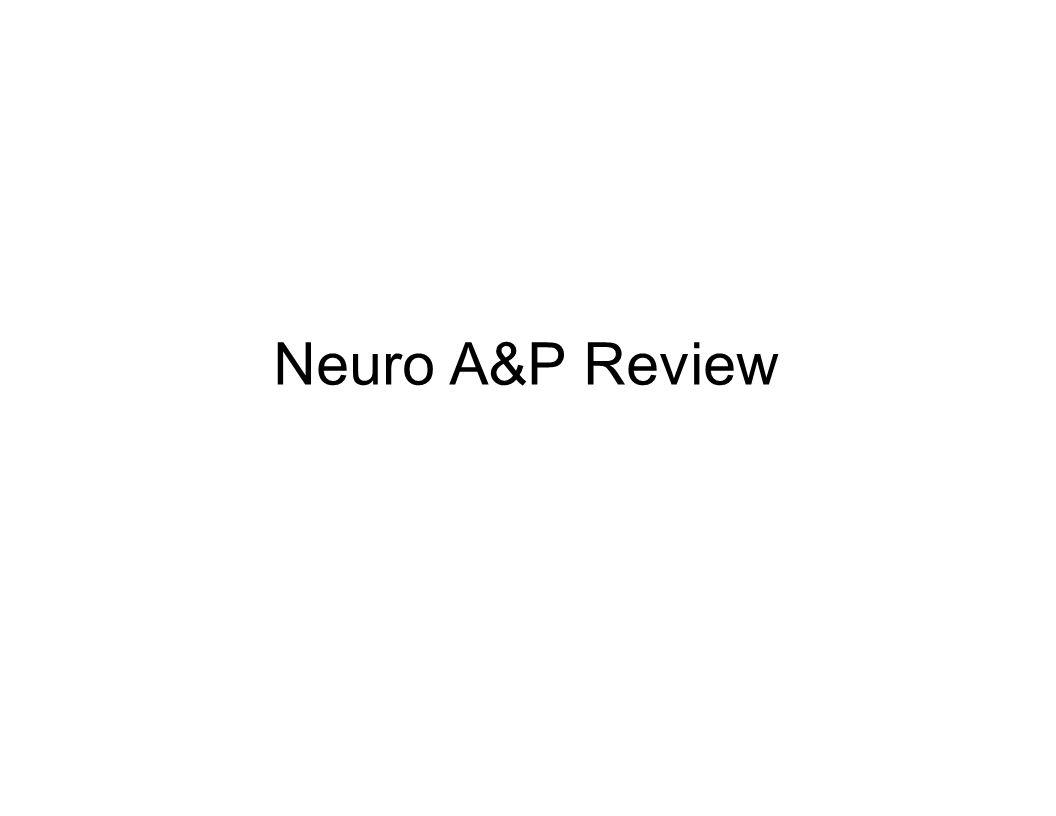 Patho/Phys II Neuro A&P Review