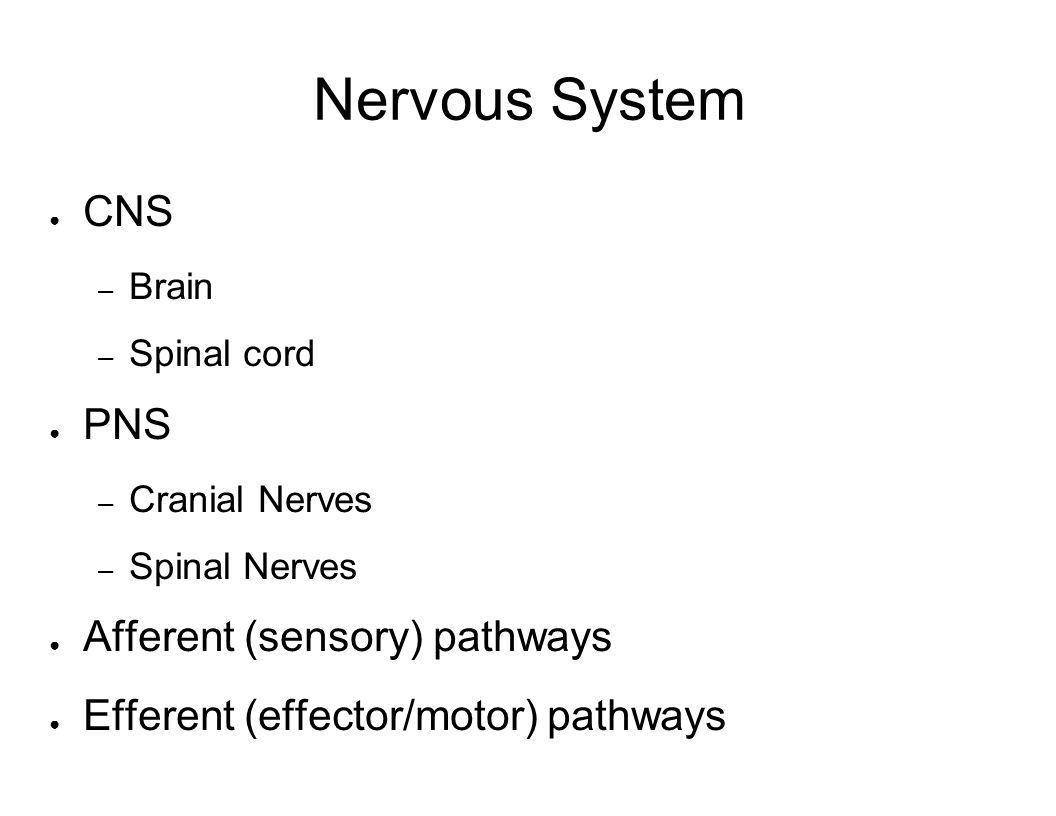 Nervous System CNS PNS Afferent (sensory) pathways