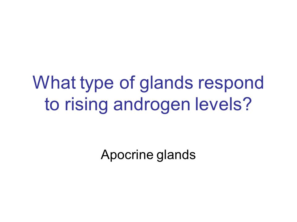 What type of glands respond to rising androgen levels