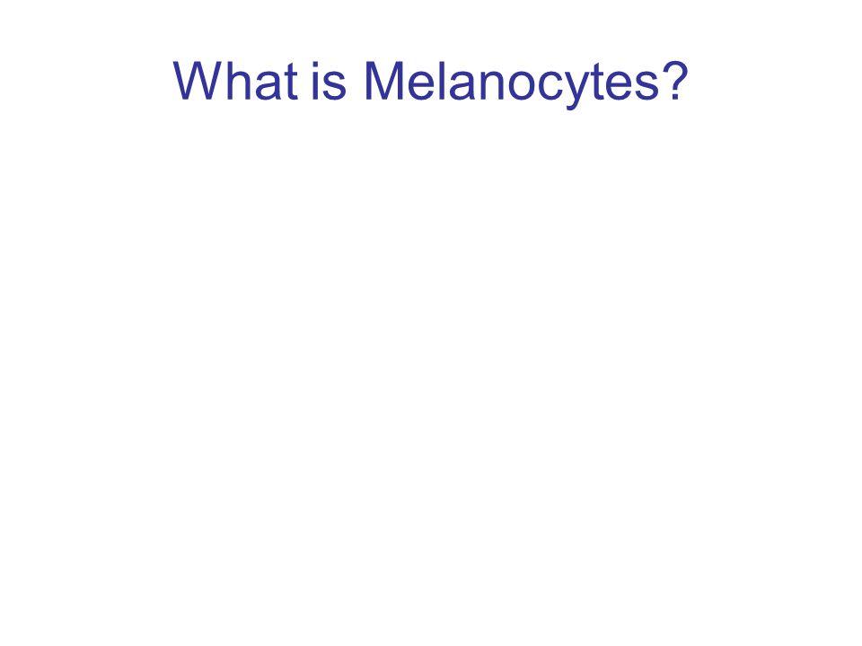What is Melanocytes