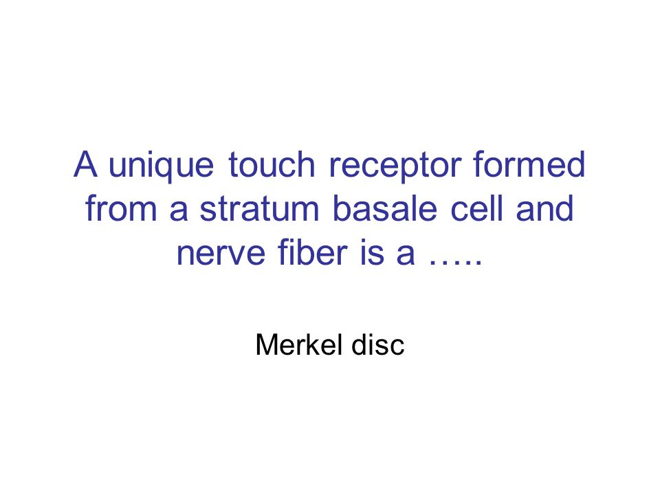 A unique touch receptor formed from a stratum basale cell and nerve fiber is a …..