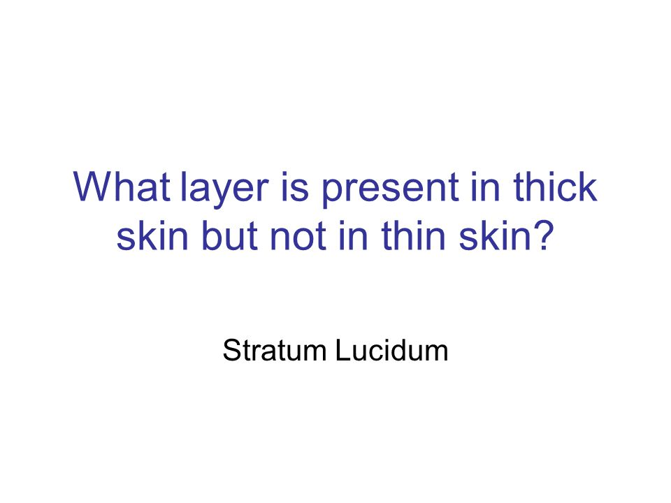 What layer is present in thick skin but not in thin skin