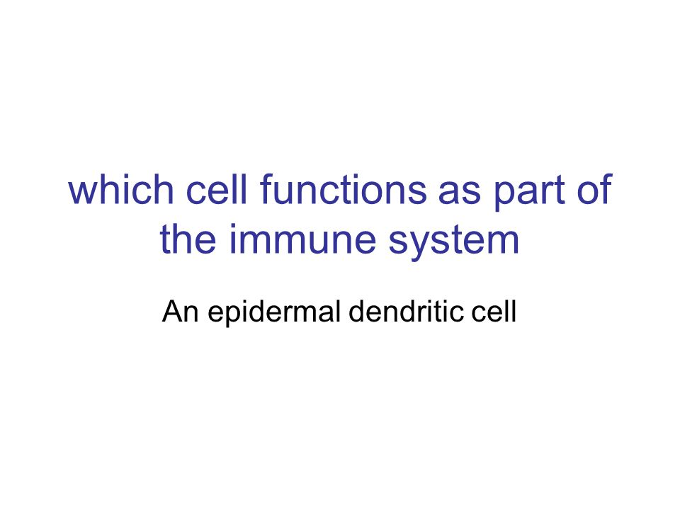 which cell functions as part of the immune system