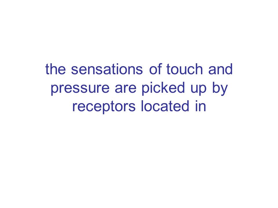 the sensations of touch and pressure are picked up by receptors located in