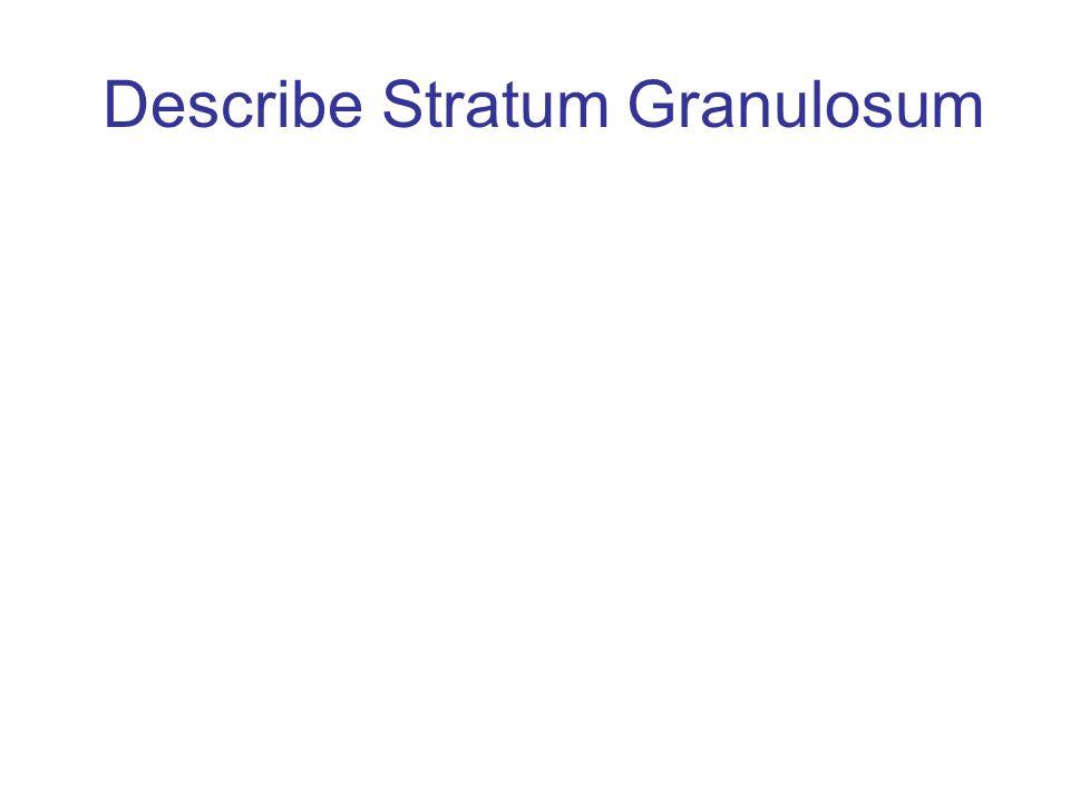 Describe Stratum Granulosum