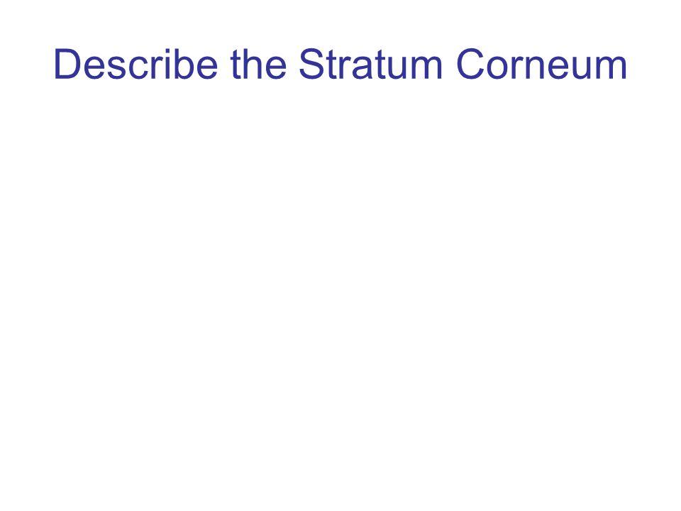 Describe the Stratum Corneum