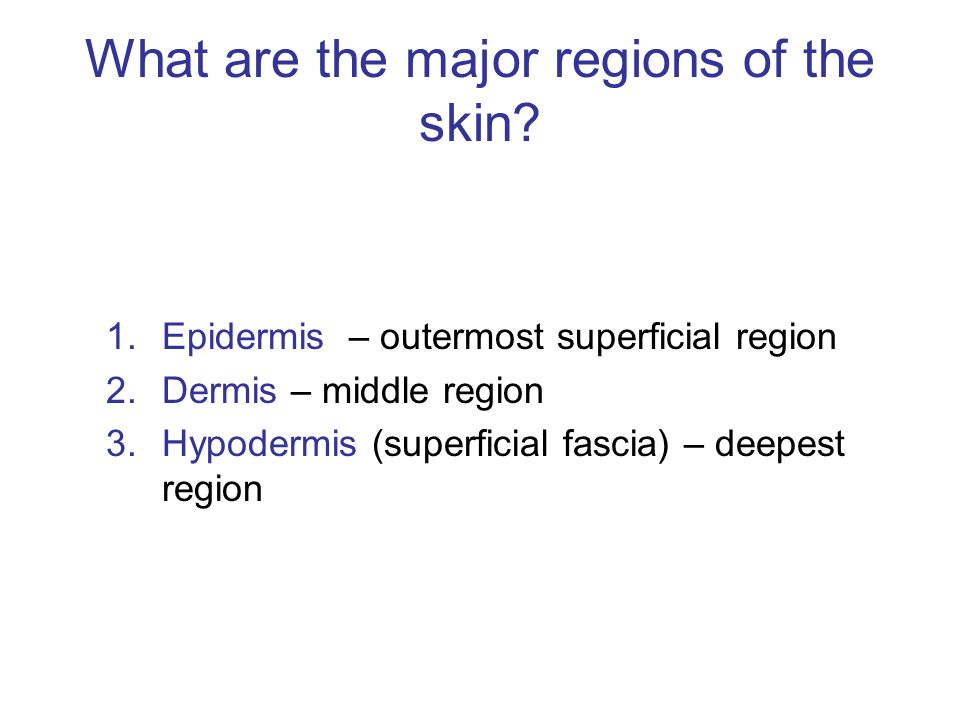 What are the major regions of the skin
