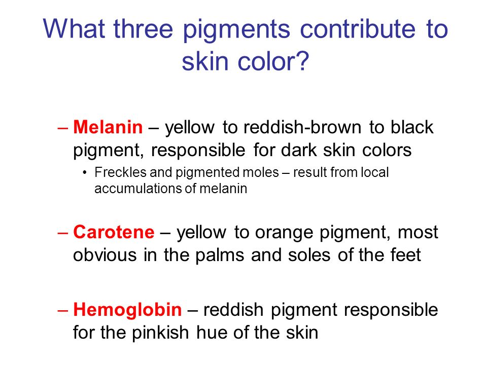 What three pigments contribute to skin color
