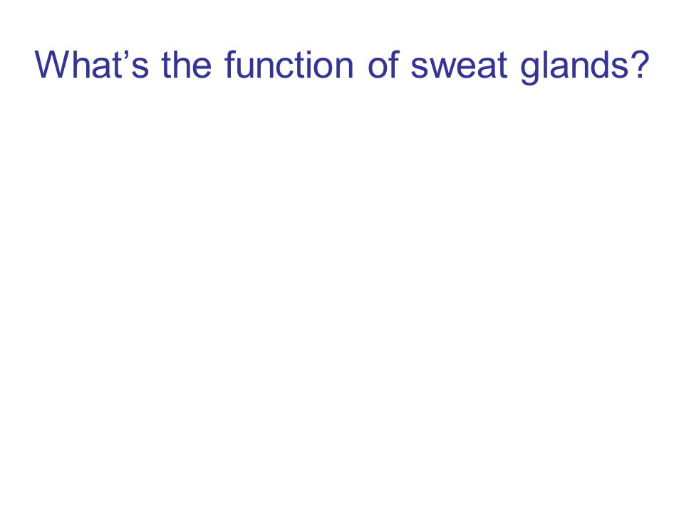 What's the function of sweat glands