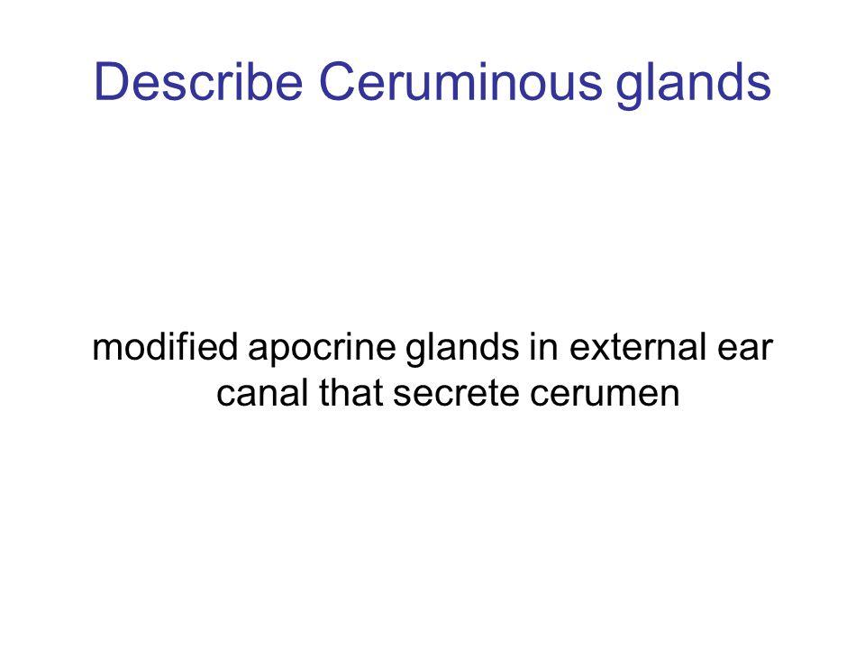 Describe Ceruminous glands