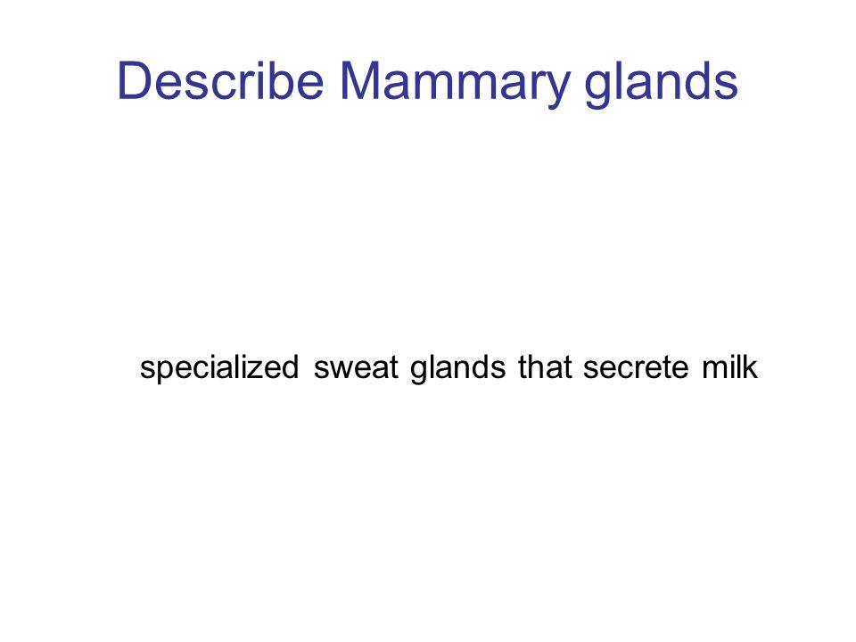 Describe Mammary glands