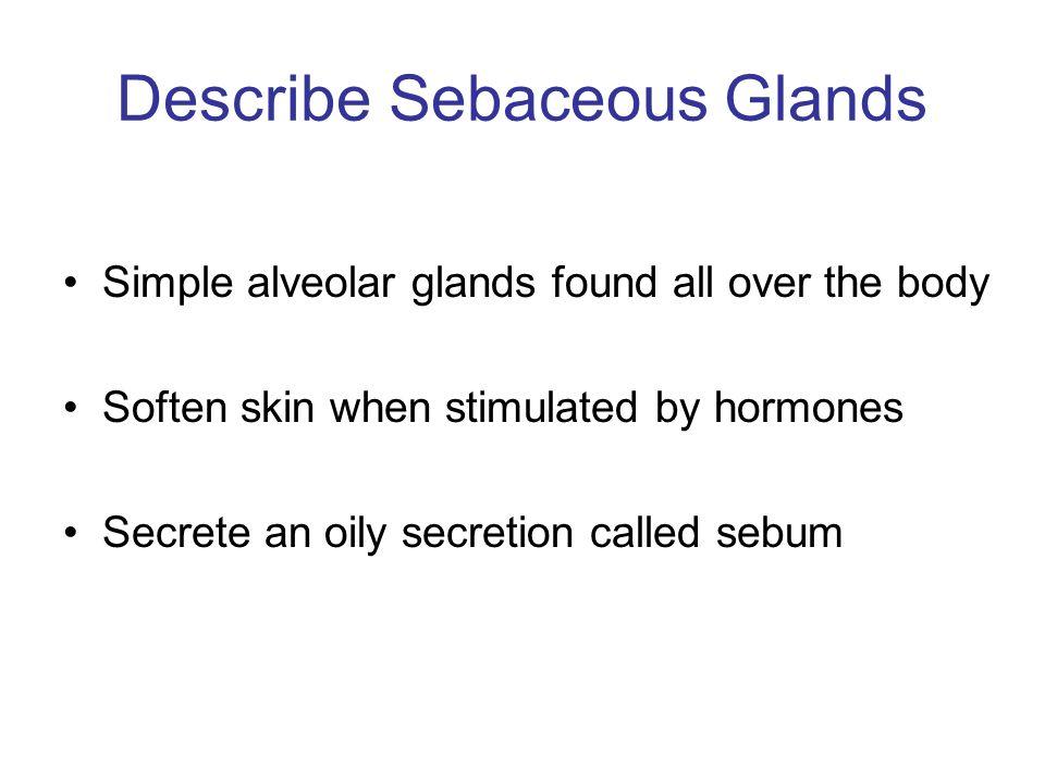 Describe Sebaceous Glands