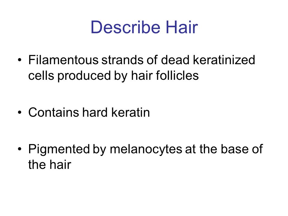 Describe Hair Filamentous strands of dead keratinized cells produced by hair follicles. Contains hard keratin.