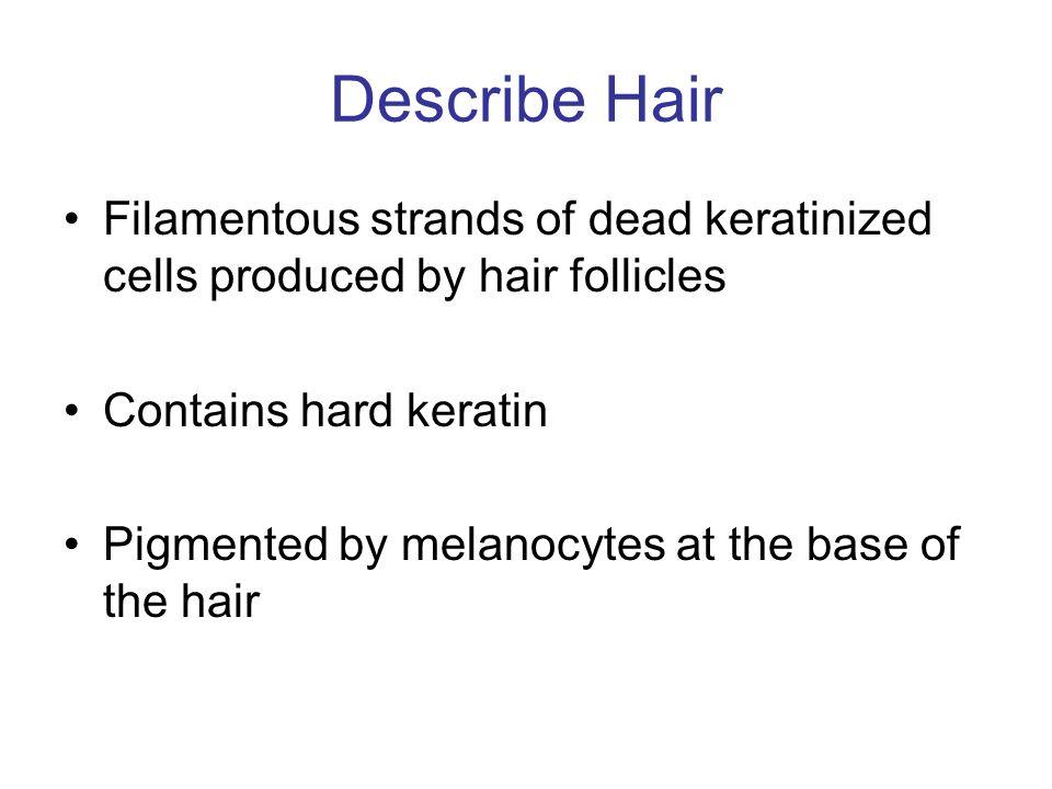 Describe Hair Filamentous strands of dead keratinized cells produced by hair follicles. Contains hard keratin.